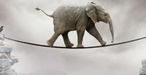 القيادة بعاطفة الفيلة في المنظمات غير الربحية!